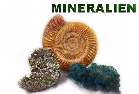 mineralien fossilien wien