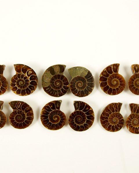 Ammonit geschnitten ca 3 cm Durchmesser, Madagaskar
