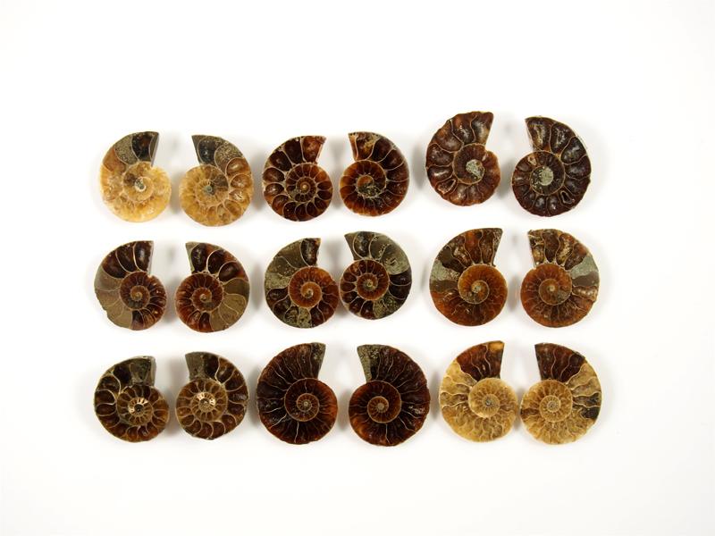 Ammonit geschnitten kleine Paare